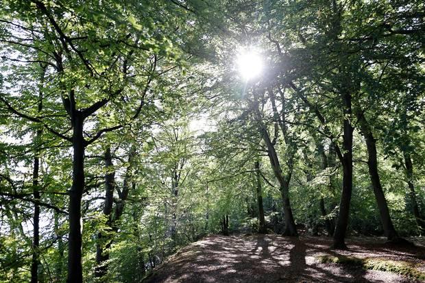 Styrelse har fået 381 ansøgninger til EU-finansieret pulje, der giver tilskud til at omdanne marker til skov.